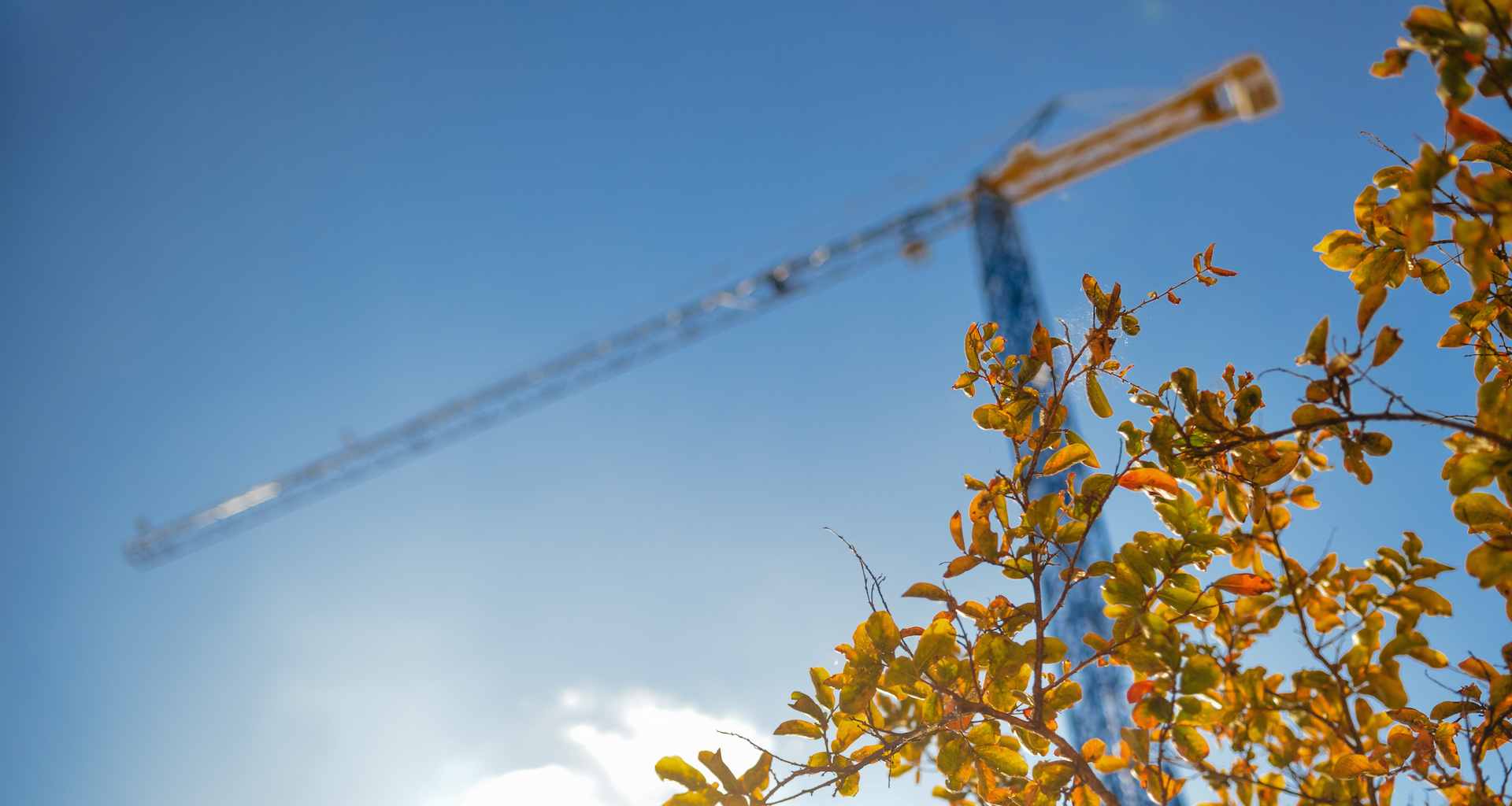 construction-industry-crane-leaves